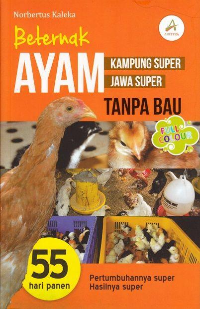 BETERNAK AYAM KAMPUNG SUPER, JAWA SUPER TANPA BAUen